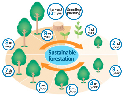 Recycling of forestation projects